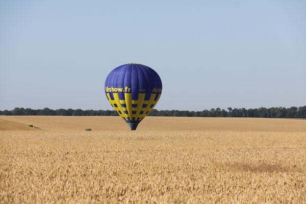 Maria vient de trouver un chemin pour se poser entre deux champs de blé