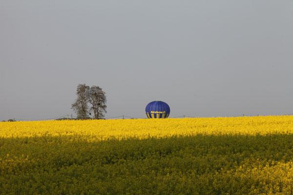 Ballon et colza