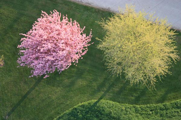 Un cerisier, c'est sur, mais le second ?