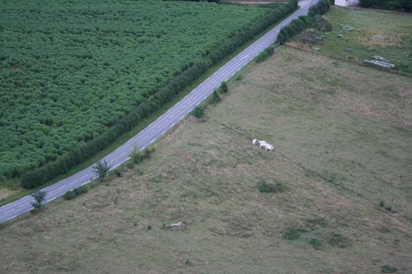 A gauche de l'herbe à à éléphant