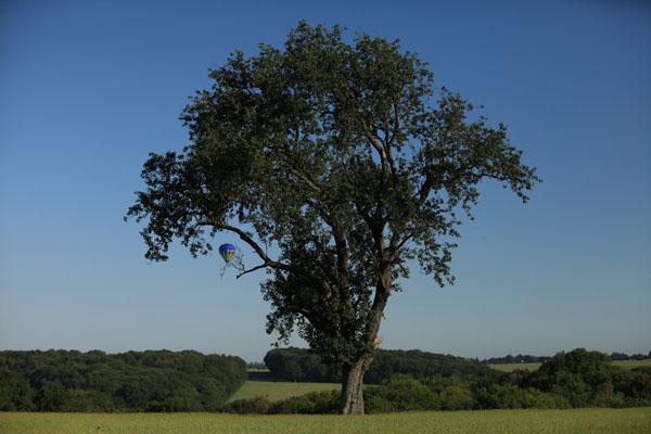 La montgolfière joue à cache-cache avec les arbres